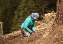 Auf in die Schweizer Bergwälder